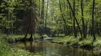 EU protected habitats