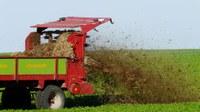 Agricultural land: nitrogen balance