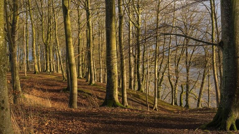 Forest utilisation