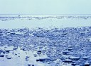 Rising sea temperatures, ice-free Arctic summers and a changing marine food chain