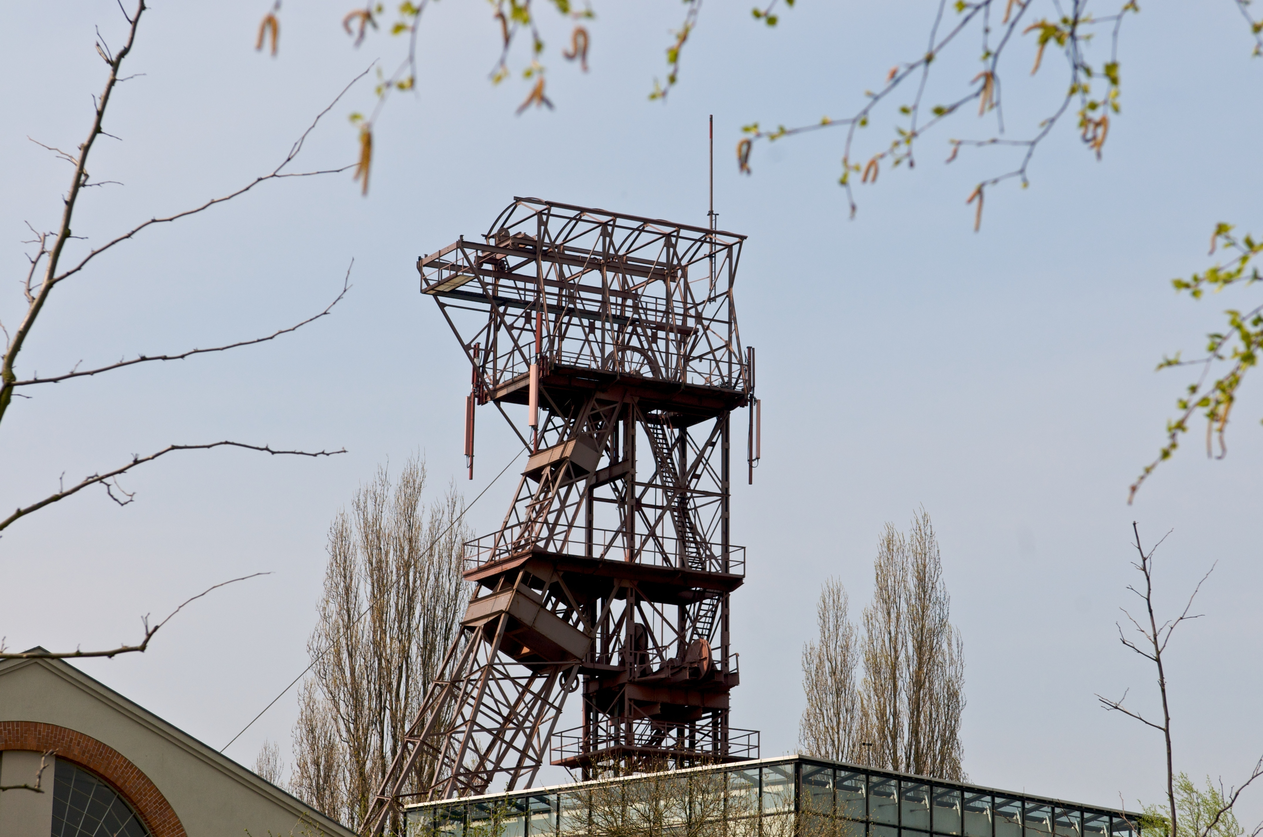 A Forest Built on Coal 1 .jpg