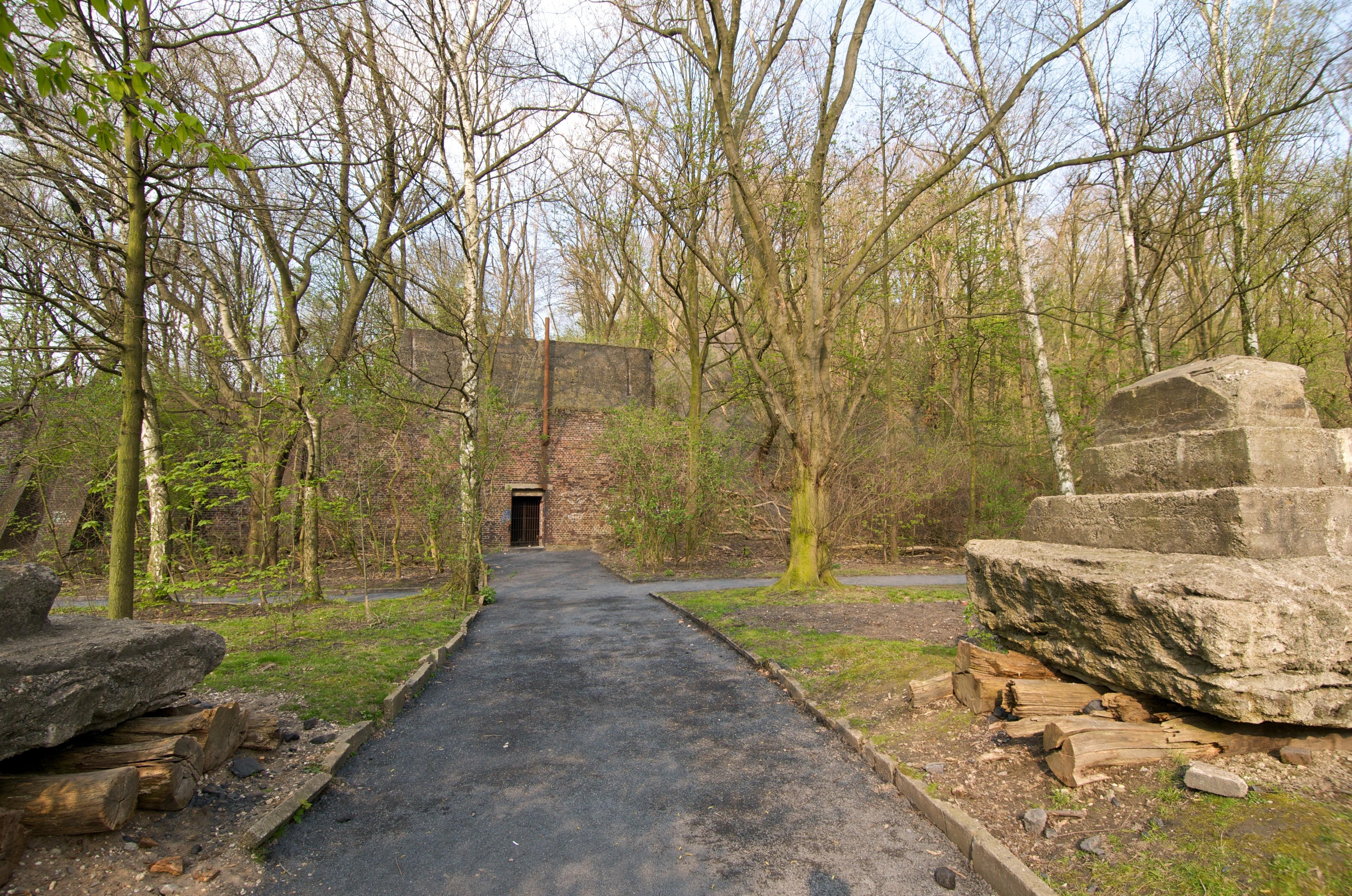 A Forest Built on Coal 11.jpg