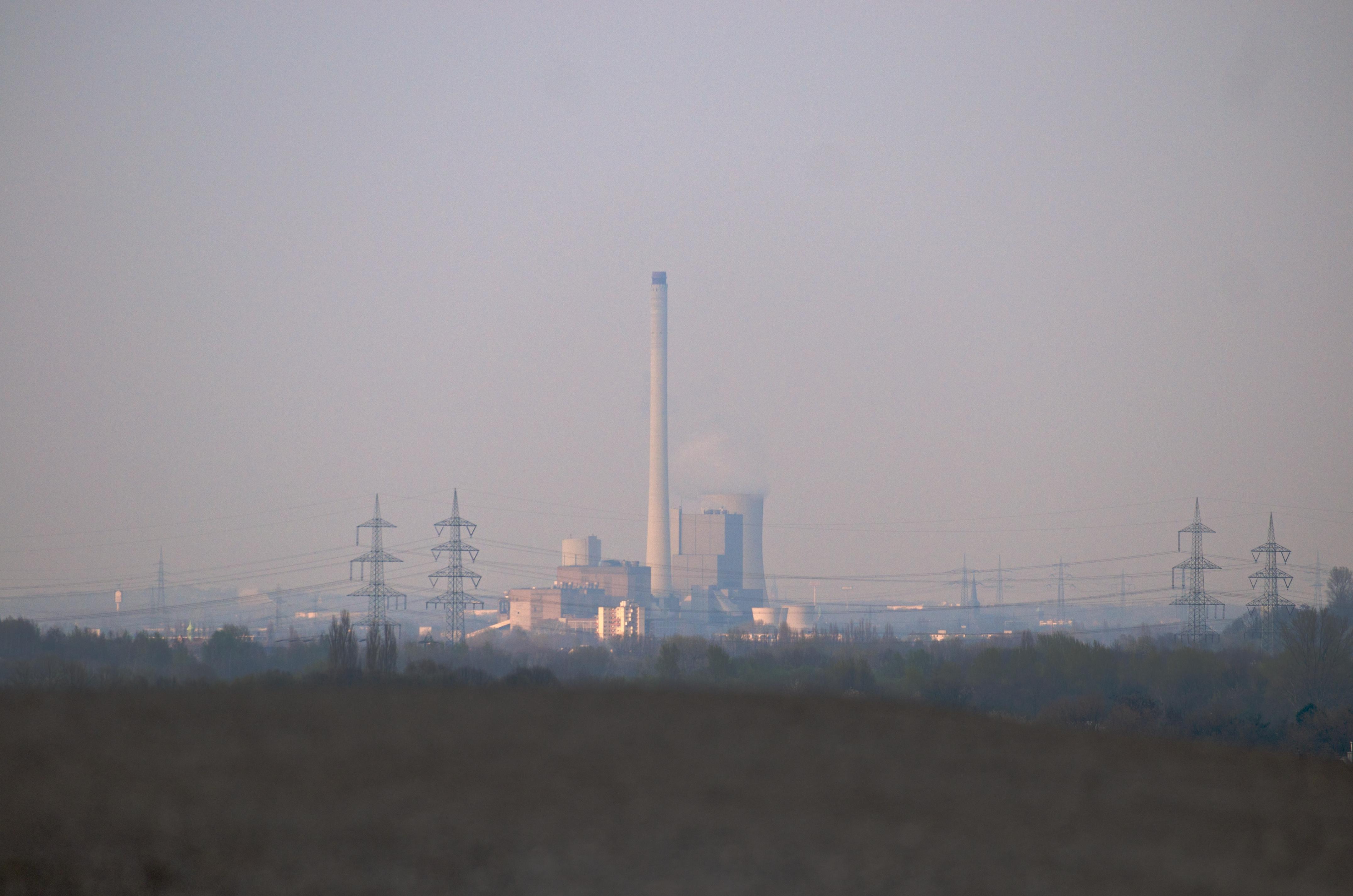 A Forest Built on Coal 8.jpg