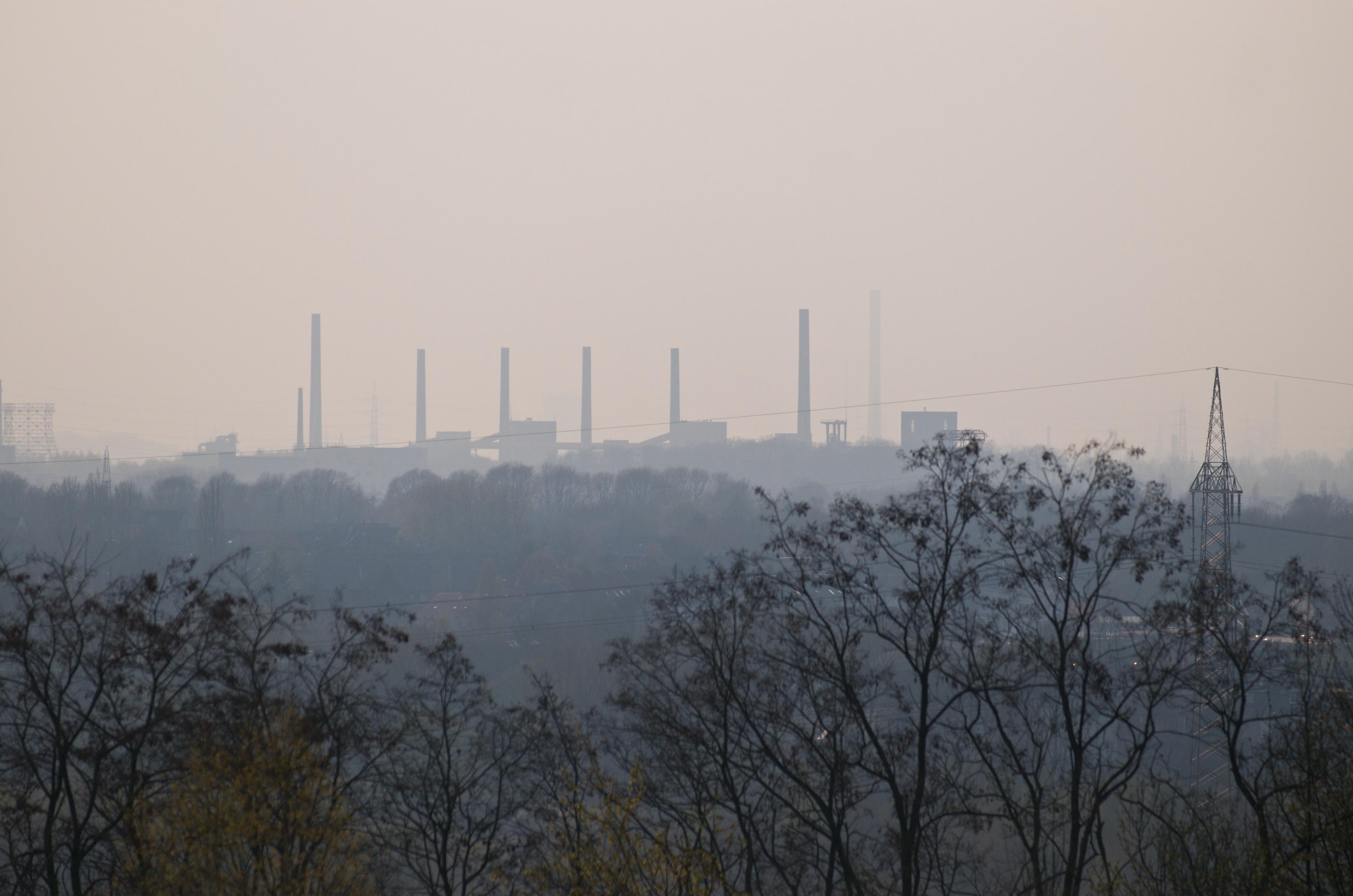 A Forest Built on Coal 9.jpg