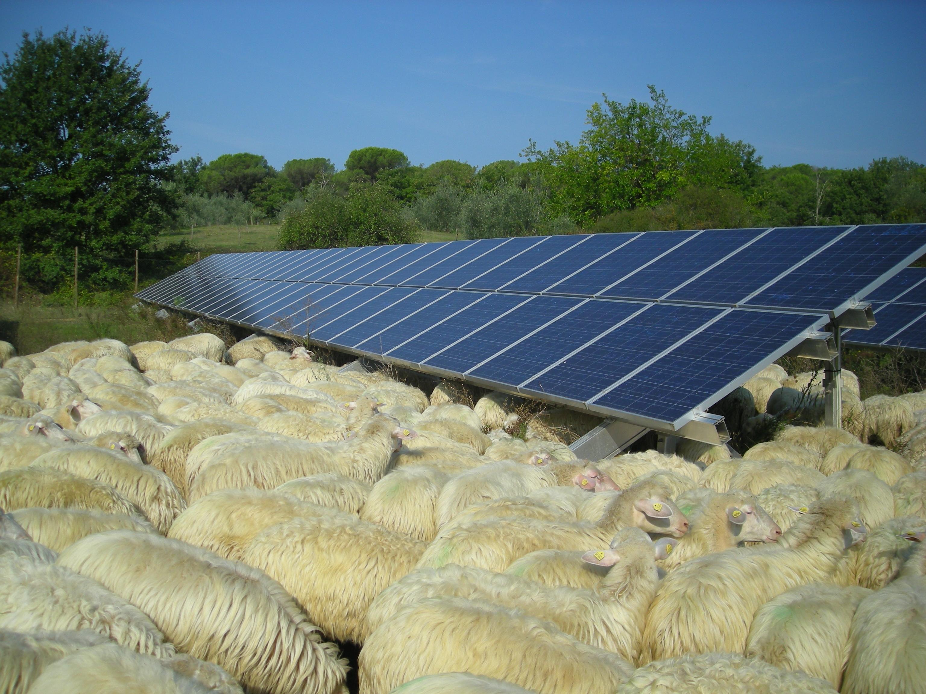 Carbon Farmers 11.JPG