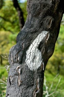 Natural Cork 8.jpg