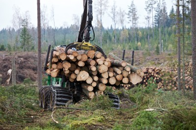 The Swedish forestry model