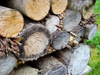 Schwander Farm Log-pile