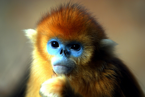 Monkey with makeup