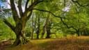 Fakta o evropských lesních ekosystémech