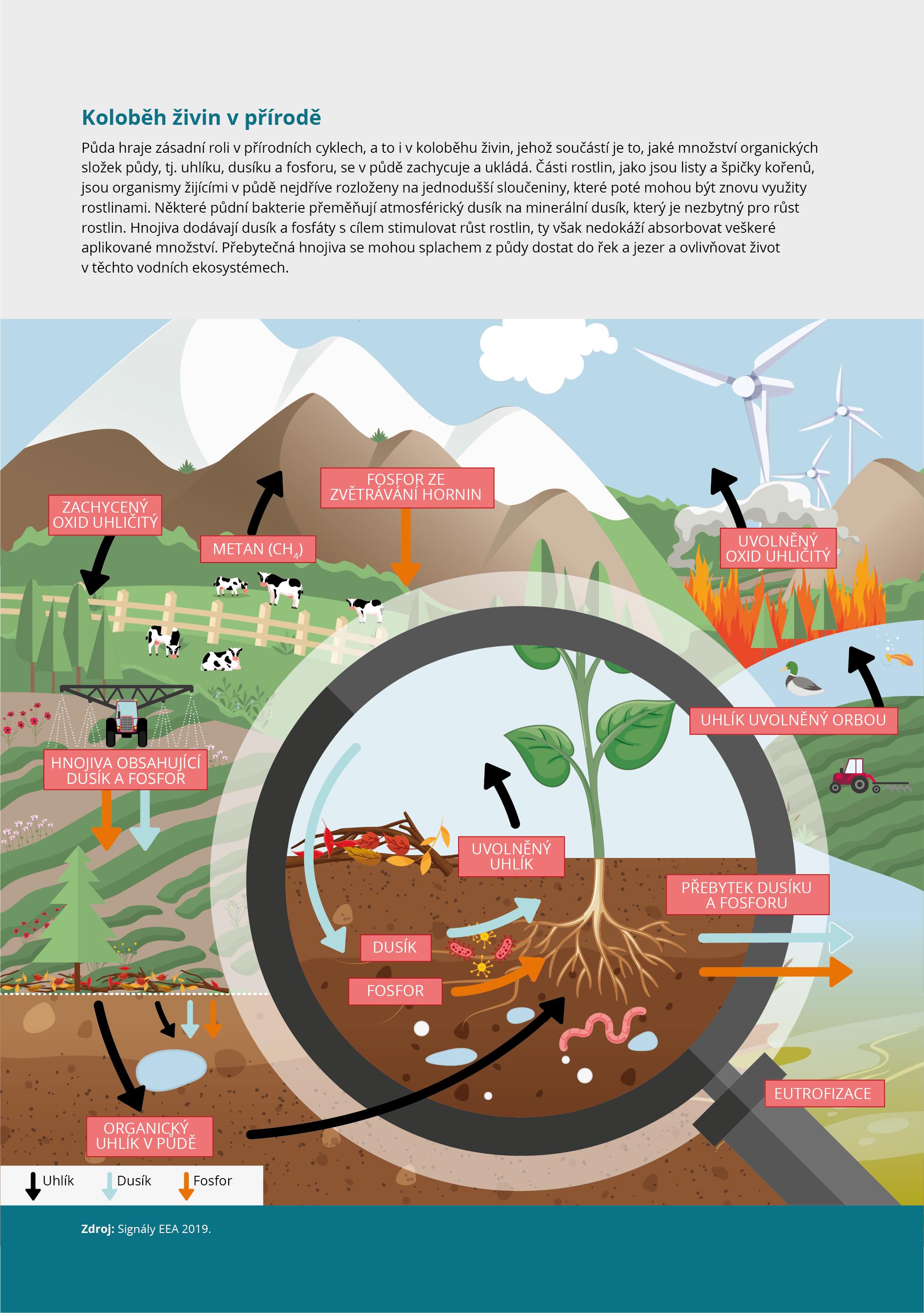 Koloběh živin v přírodě