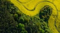 Znečištění krajiny a půdy — rozšířené, škodlivé a rostoucí