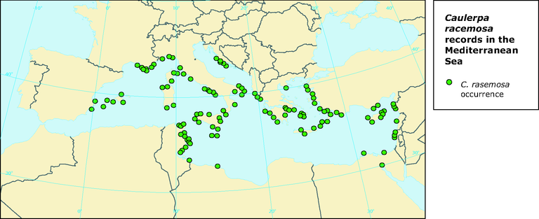 https://www.eea.europa.eu/data-and-maps/figures/caulerpa-racemosa-records-in-the-mediterranean-sea/figure-09-2pia.eps/image_large