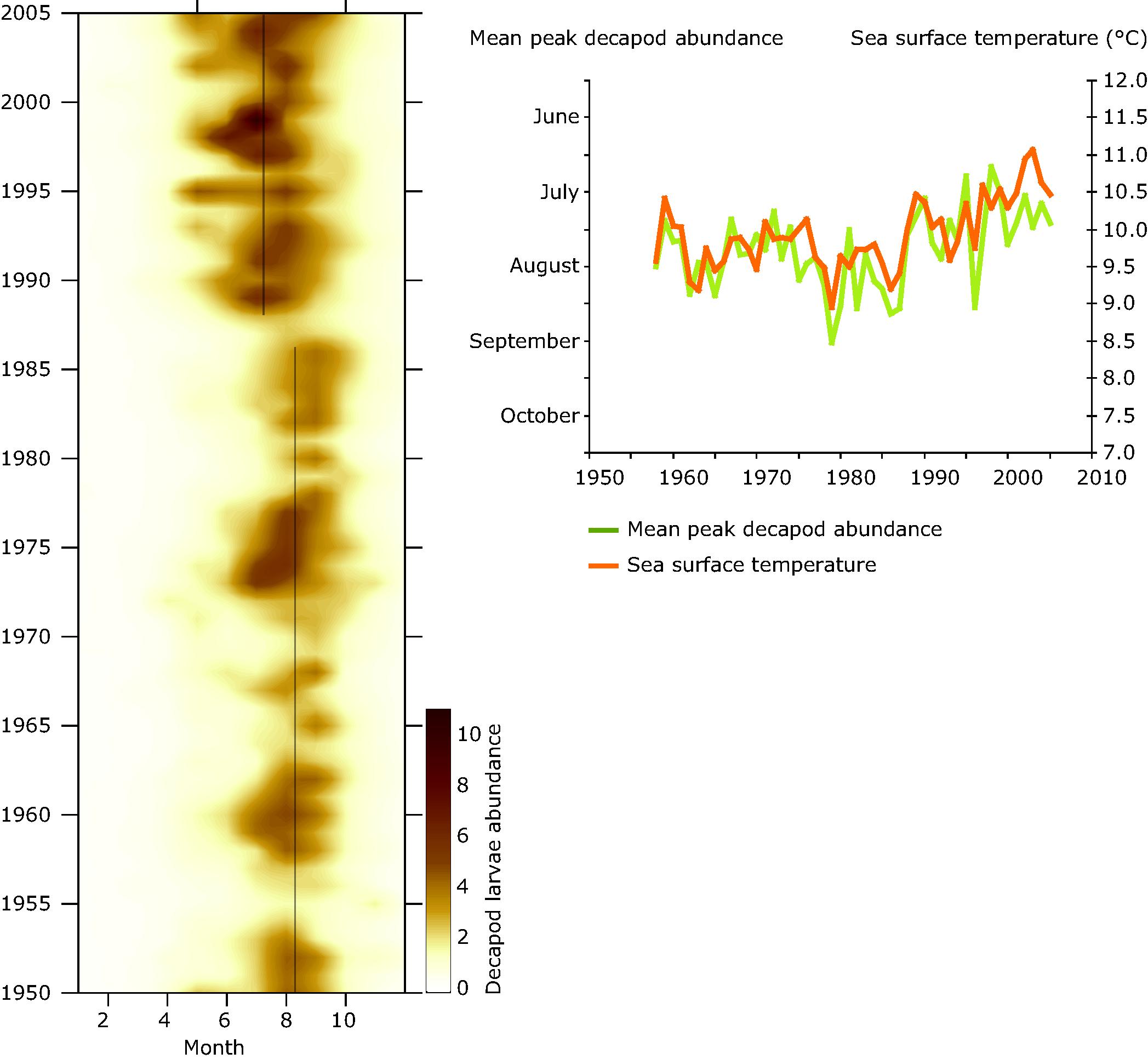 Decapod abundance in the central North Sea 1950-2005