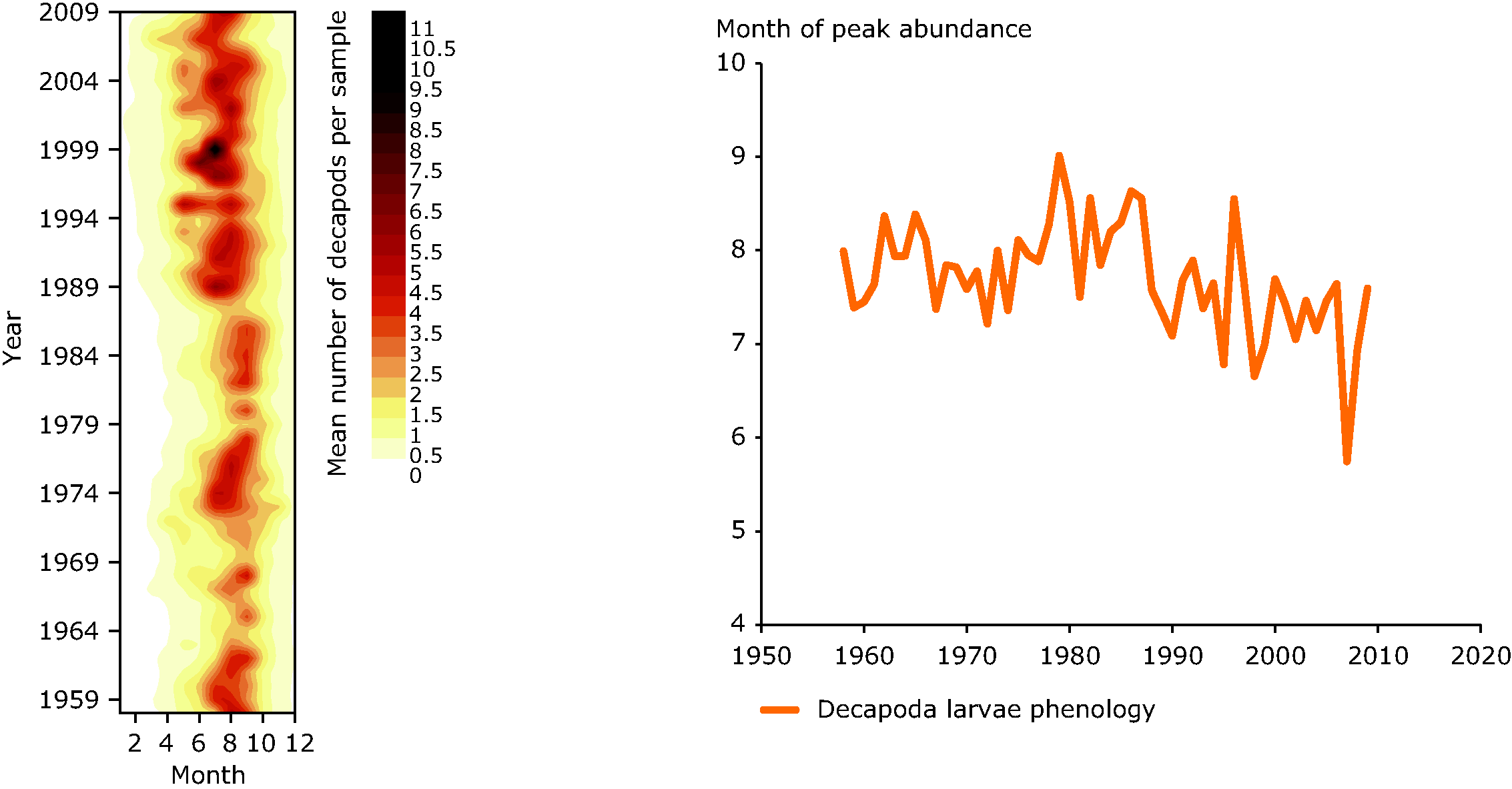 Decapoda larvae abundance and phenology in the central North Sea
