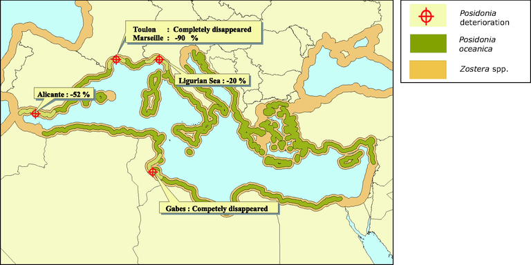 http://www.eea.europa.eu/data-and-maps/figures/distribution-of-the-marine-angiosperm-posidonia-oceanica-and-zostera-sp-in-the-mediterranean/figure-09-1pia.eps/image_large