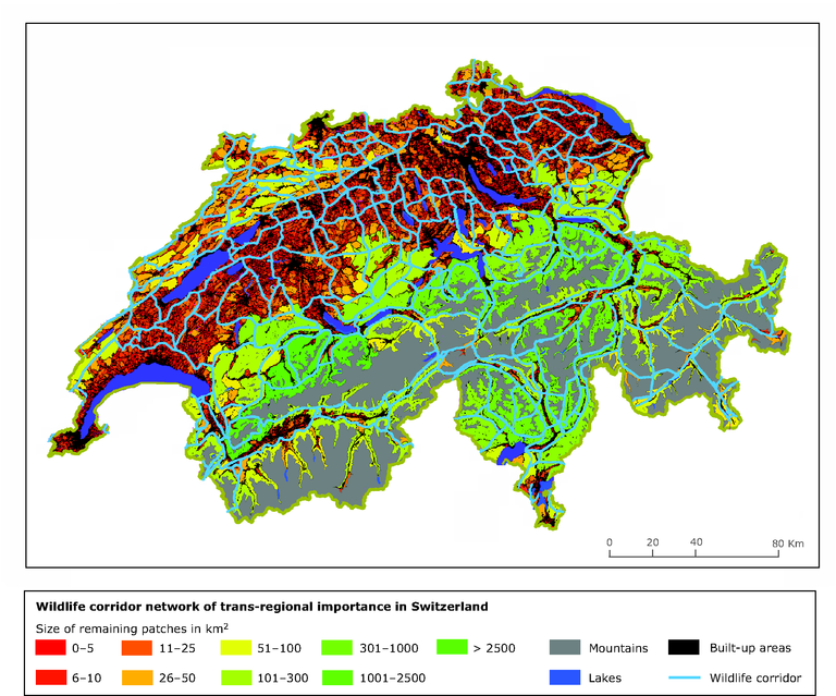 http://www.eea.europa.eu/data-and-maps/figures/overlay-of-the-wildlife-corridor/overlay-of-the-wildlife-corridor/image_large