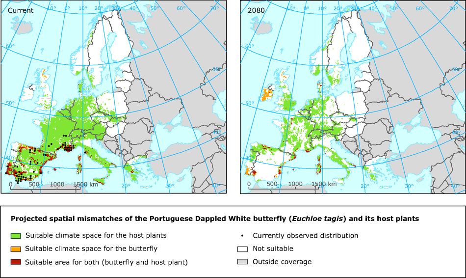 Projected spatial mismatches of the Portuguese Dappled White butterfly and its host plants