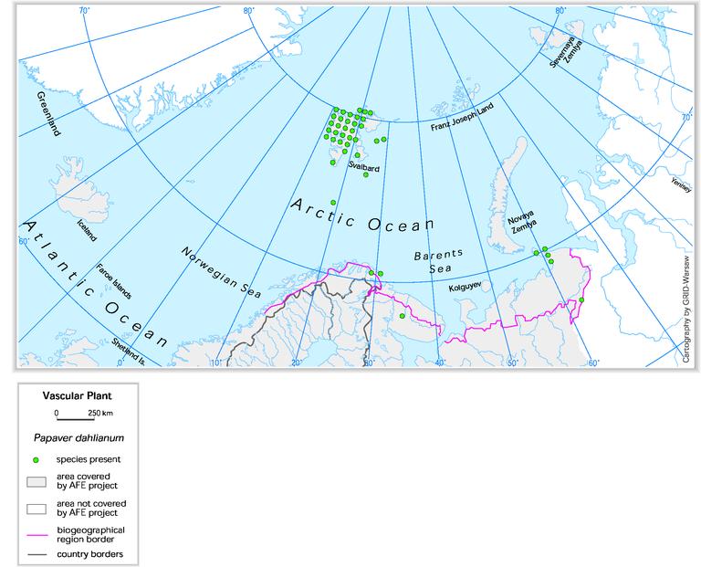 Svalbard poppy (Papaver dahlianum) — European Environment Agency