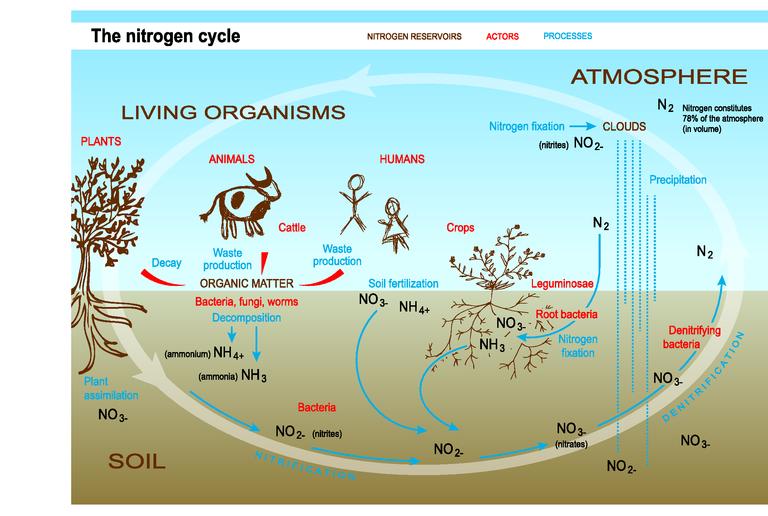 the nitrogen cycle european environment agency