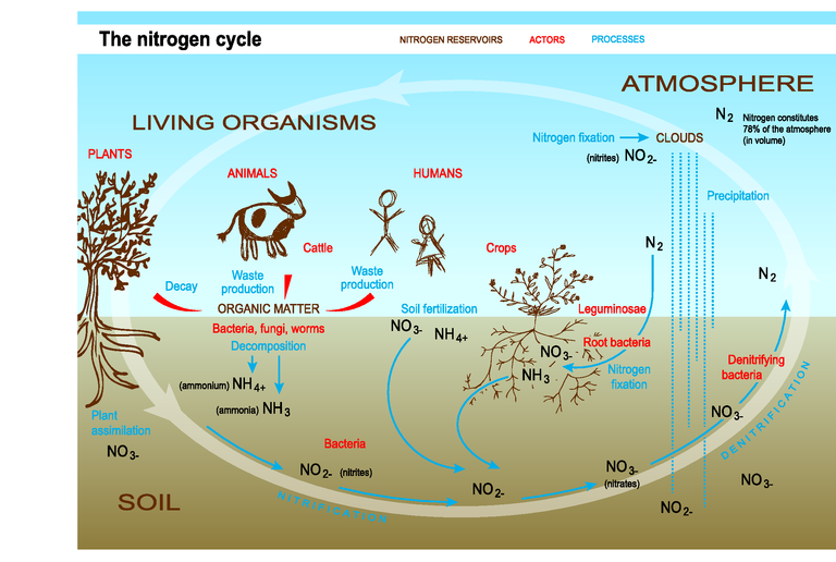 https://www.eea.europa.eu/data-and-maps/figures/the-nitrogen-cycle/trend10-2s-soer2010-eps/image_large