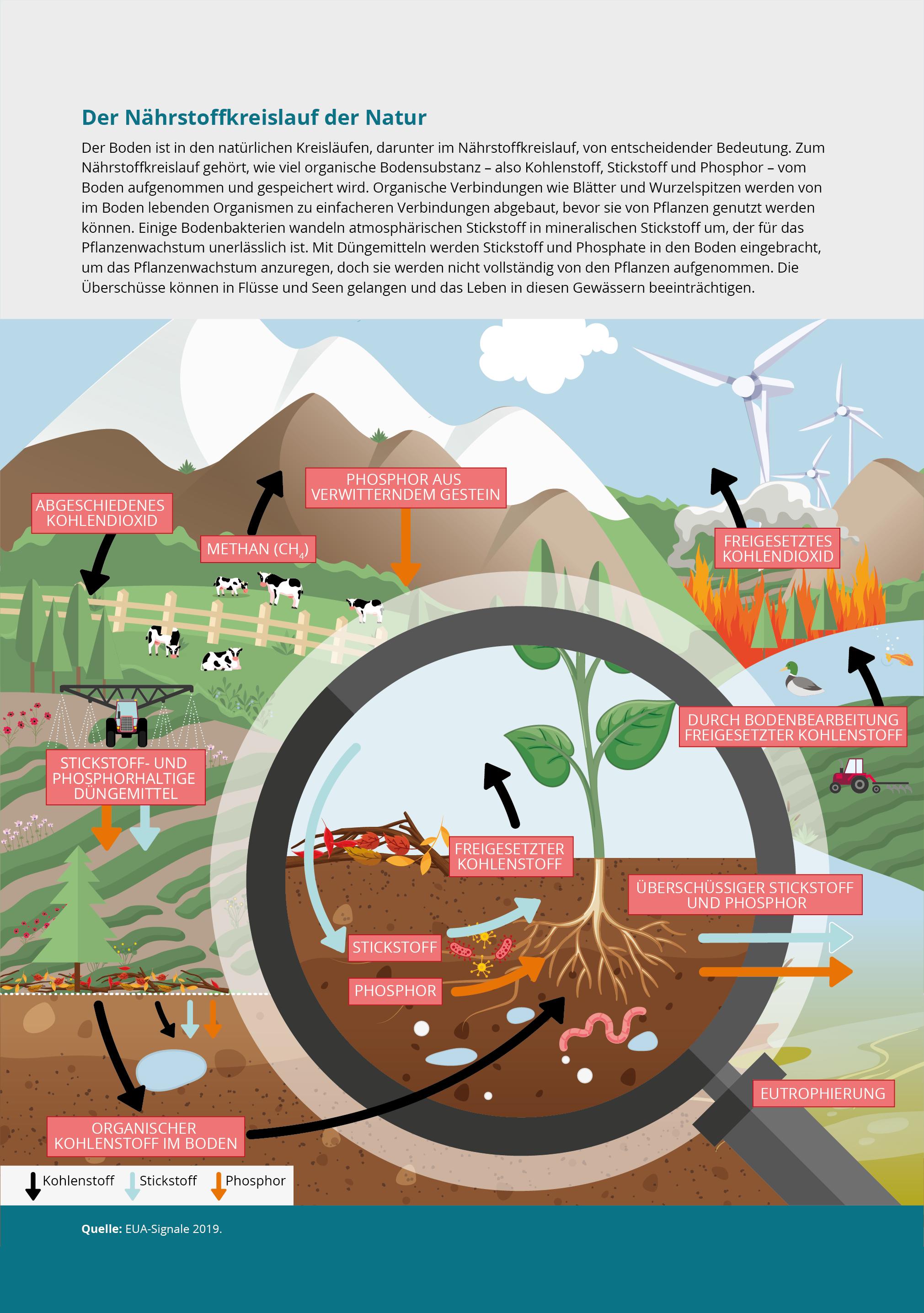 Der Nährstoffkreislauf der Natur