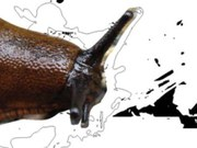 Φονικοί γυμνοσάλιαγκες και άλλα αλλόχθονα είδη - Η βιοποικιλότητα της Ευρώπης εξαφανίζεται με ανησυχητικό ρυθμό