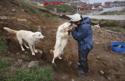 Ο Dines και σκυλιά