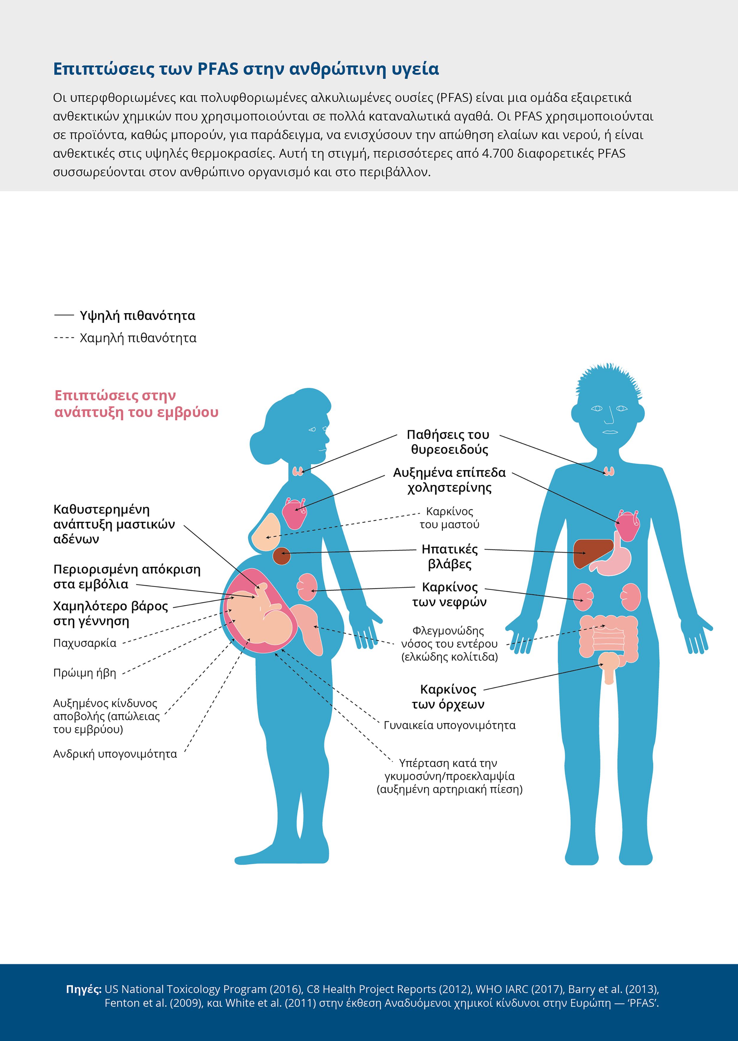 Επιπτώσεις των PFAS στην ανθρώπινη υγεία