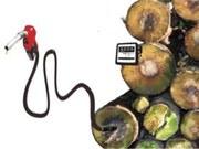 Si la bioenergía se dispara — La sustitución del petróleo por la bioenergía no está exenta de riesgos
