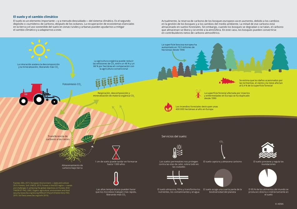 El suelo es un elemento importante —y a menudo descuidado— del sistema climático. Es el segundo depósito o «sumidero» de carbono, después de los océanos. La recuperación de ecosistemas esenciales en la tierra y el uso sostenible del suelo en zonas rurales y urbanas pueden ayudarnos a mitigar el cambio climático y a adaptarnos a este.