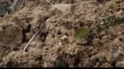 Entrevista — El suelo: el tesoro que vive bajo nuestros pies