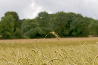 Exploitation agricole communautaire de Cloughjordan