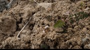 Entretien – Les sols: un trésor vivant sous nos pieds