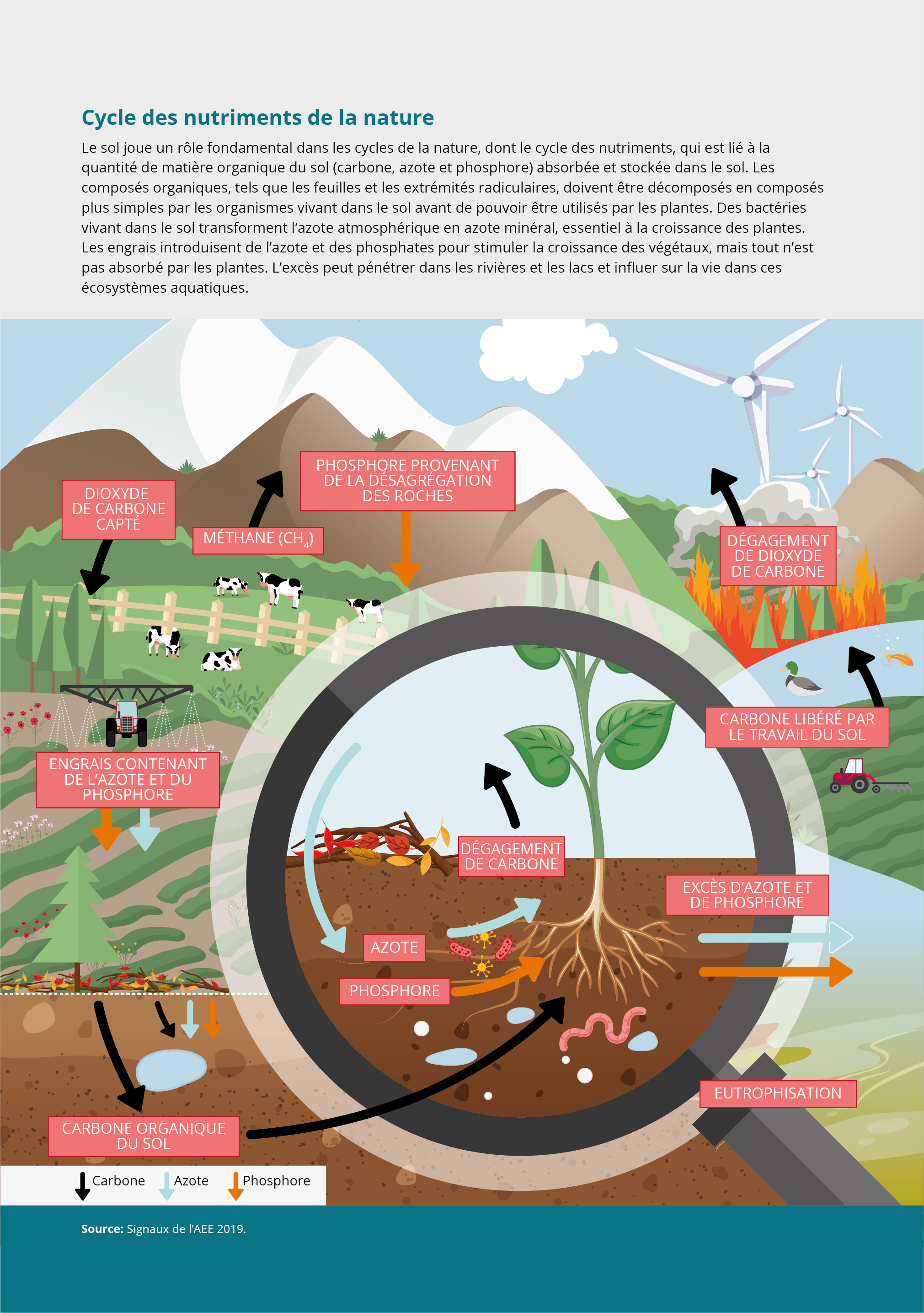 Cycle des nutriments de la nature