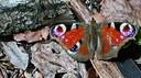 EEA's input to post-2010 biodiversity policy