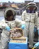 EEA Beehives