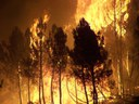 Forest fires in Southern Europe destroy much more than trees