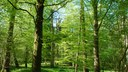 Is Europe doing enough to ensure long-term health of forests?