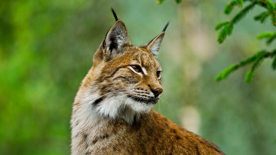 Large mammals require connected habitats