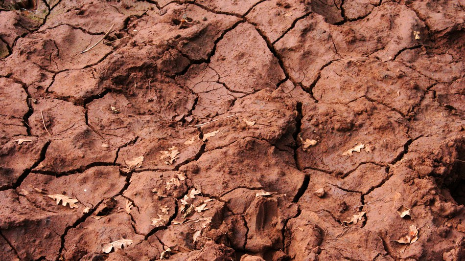 Not just dirt the importance of soil european for Soil our life