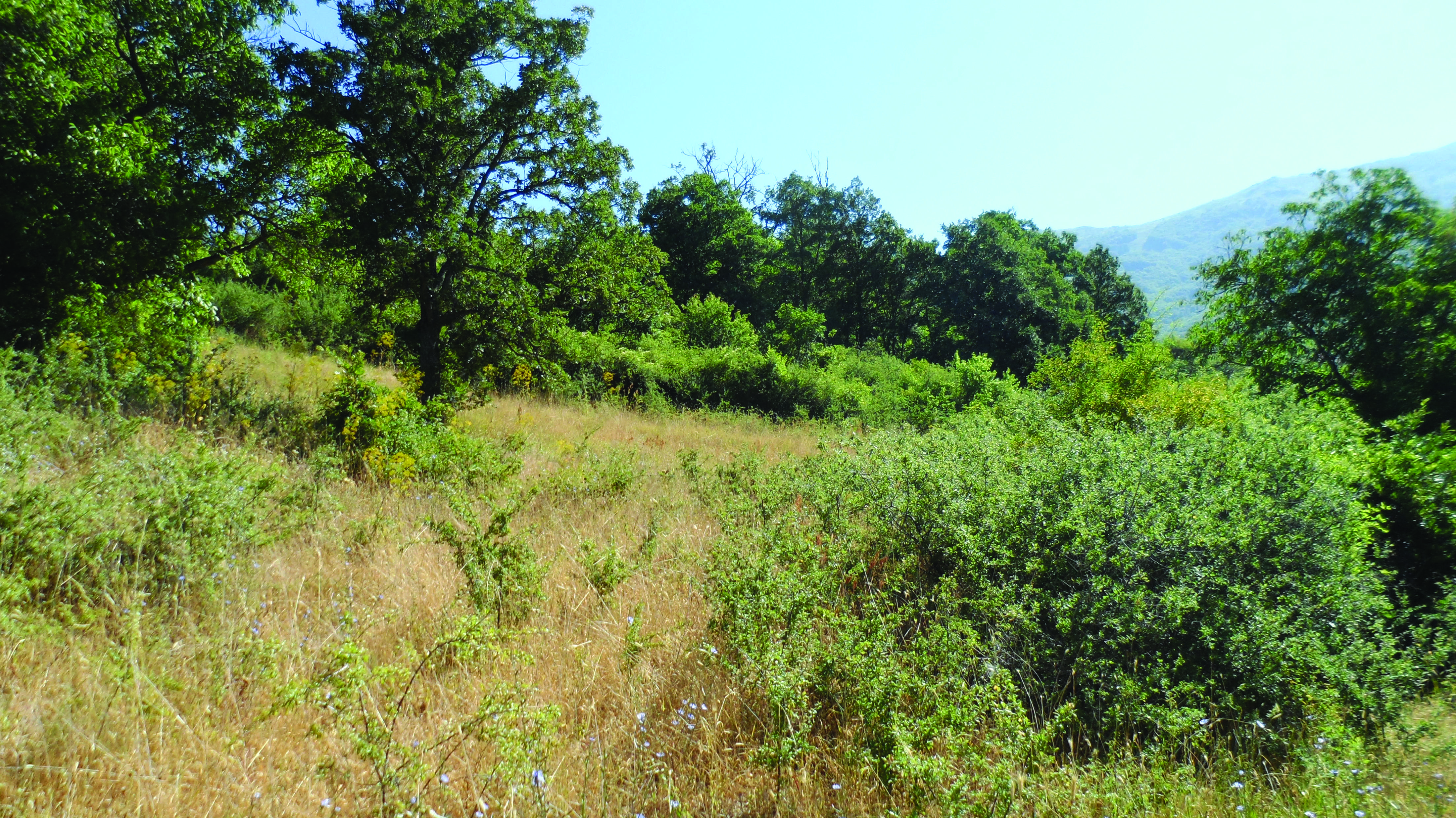 Abandoned grassland overgrown by shrubs and trees