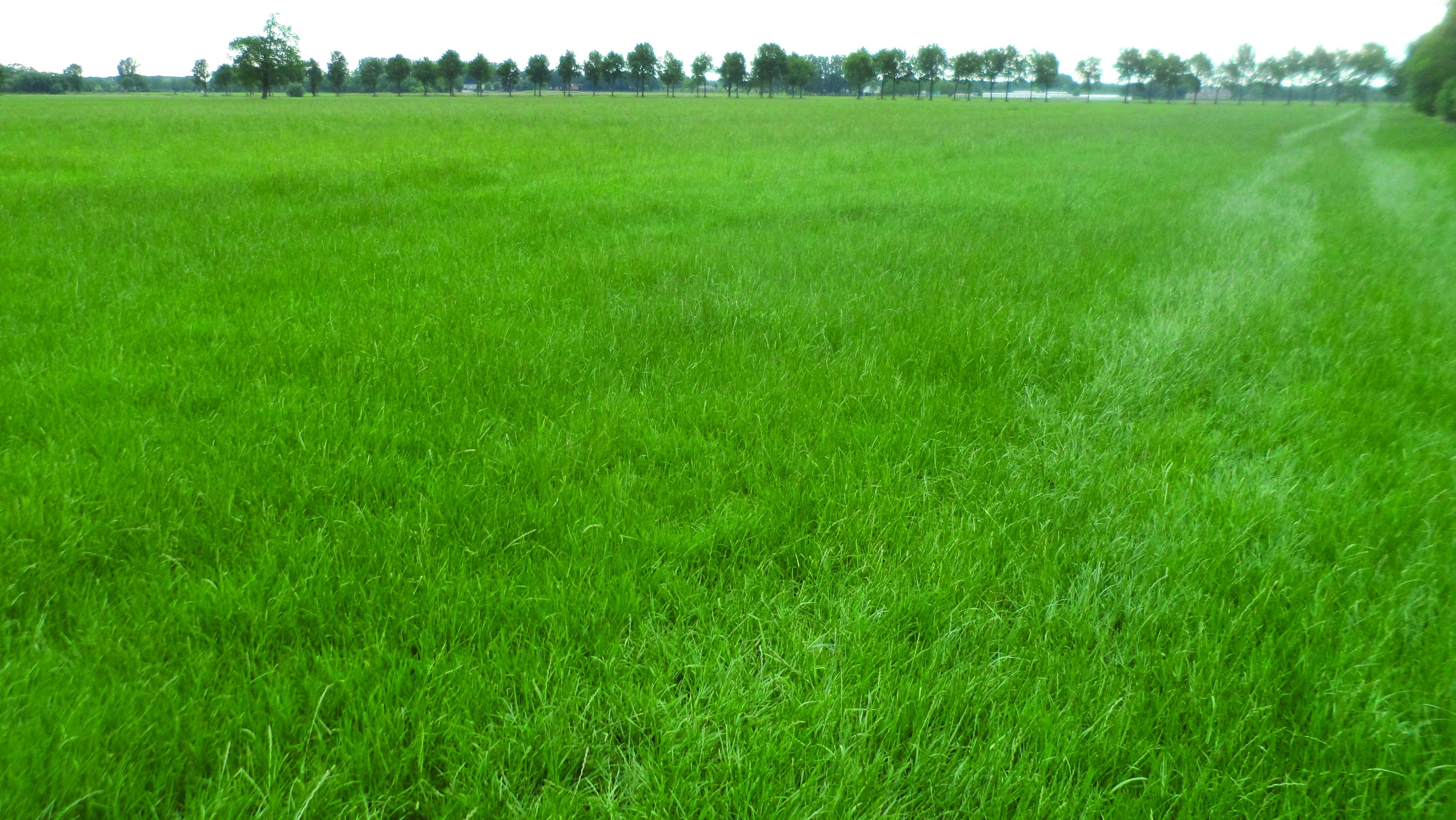Intensively farmed grassland