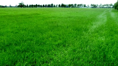 Intensively farmed grassland