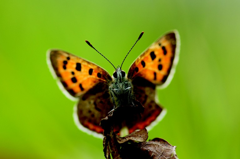 Full Size Van >> European Grassland Butterfly Indicator - pictures ...