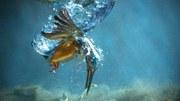 Acqua pulita significa vita, salute, alimentazione, tempo libero, energia...