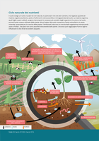 Ciclo naturale dei nutrienti