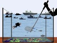 Jūros — Jūrų biologinei įvairovei yra iškilusi grėsmė