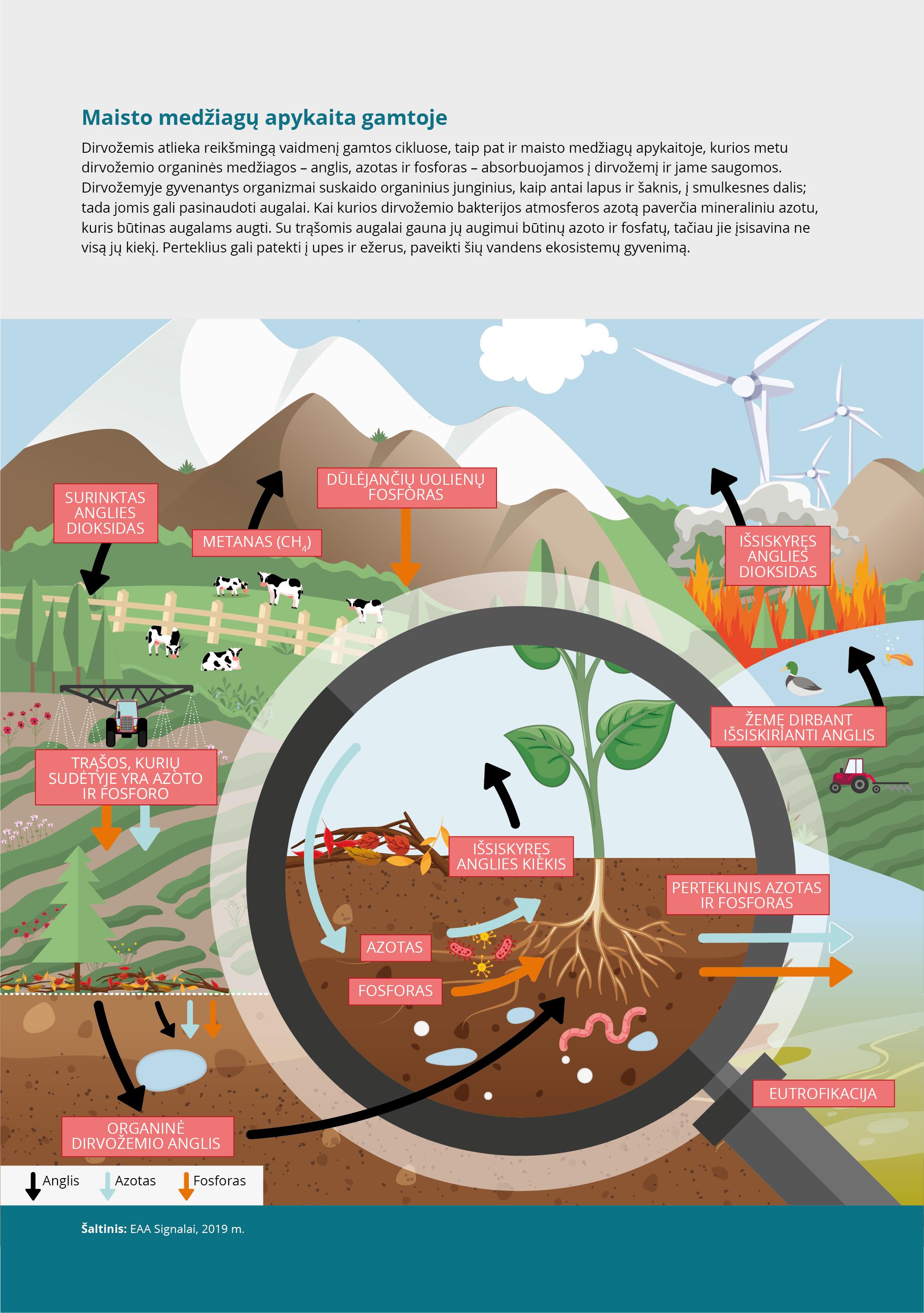 Maisto medžiagų apykaita gamtoje