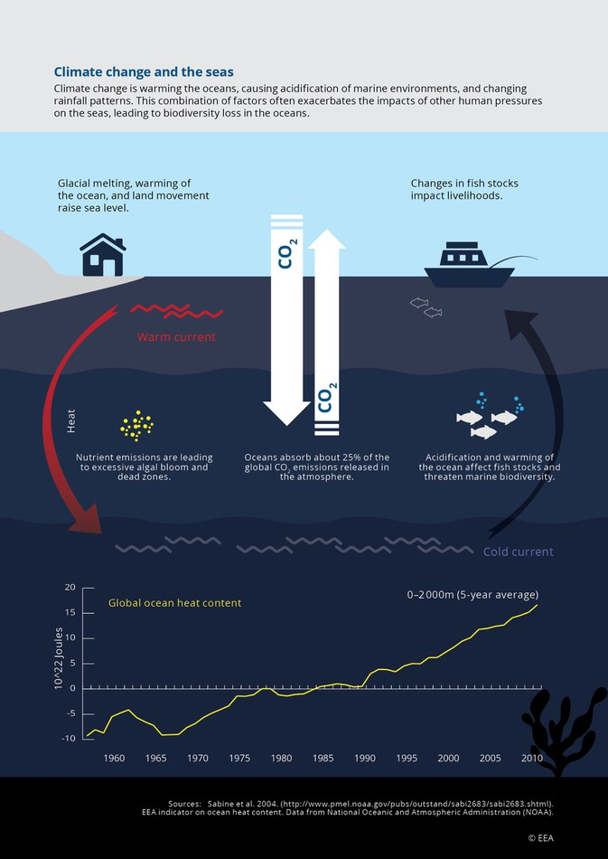 Climate change is warming the oceans, causing acidification of marine environments, and changing rainfall patterns. This combination of factors often exacerbates of other human pressures on the seas, leading to biodiversity loss in the oceans.